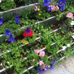 BlumenFassade5