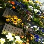BlumenFassade7