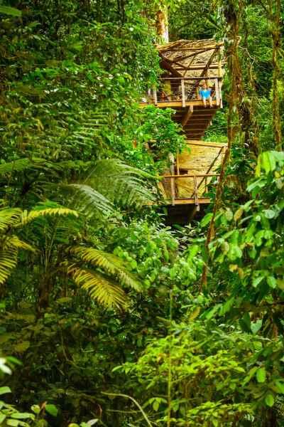 Blick auf Baumhaus-Hotel im Regenwald