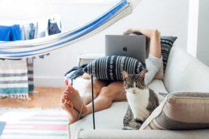 Rechtsfragen Haustier in Wohnungen: Katze auf Couch in Immobilie