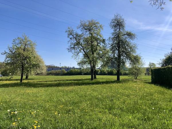 Altes Sacherl und neues Wohnhaus /  / 4850Timelkam / Bild 5